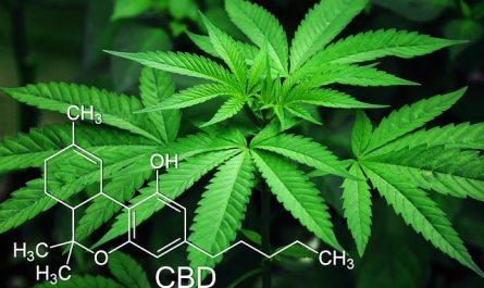 CBD et cannabis