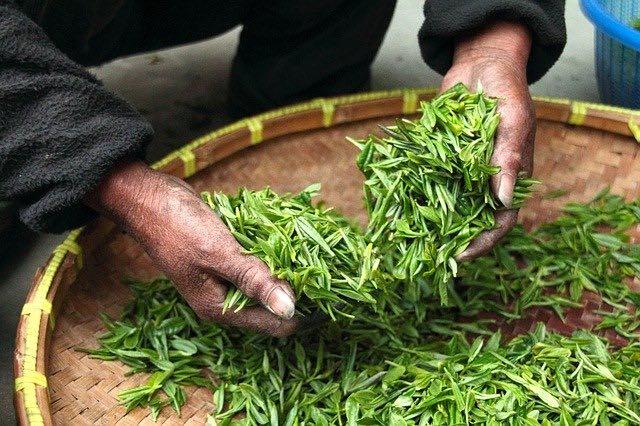 Box mensuelle thé vert